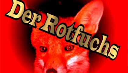 Der Rotfuchs